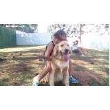 adestramento para cachorro preço Bom Retiro