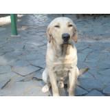 adestramento para cachorros preço Vila Olímpia