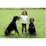 adestramento para cachorros quanto custa Vila Olímpia
