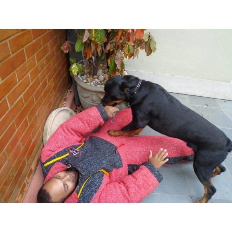 adestramento de cães bravos