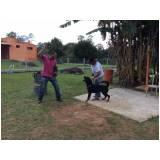 adestramento para cão de guarda preço Lapa