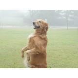 adestramentos para cachorro preço Morumbi