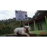 alugar cães de serviços Aldeia da serra -