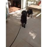 locação de cachorro de guarda