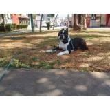 aluguel de cão de guarda em São Paulo Carapicuíba