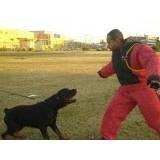 Locação de Cão de Guarda