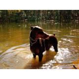 Treinador de Cão de Guarda