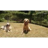 cães de segurança adestrados Butantã