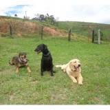 cachorros farejadores