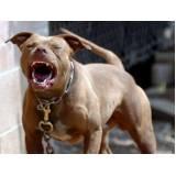 como adestrar cães bravos Lapa