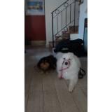 creche de hospedagem para cachorro Alphaville