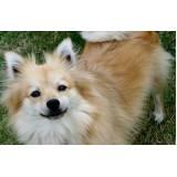 creche e day care para cães Itapevi
