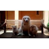 creche e pet shop para cachorro Vila Olímpia