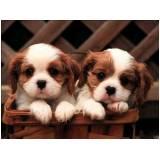 creches e pet shop para cachorros Bom Retiro
