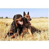 cursos para adestrar cão bravo Jardim Bonfiglioli