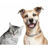 day care caninos Higienópolis