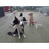 day care de cachorro em SP Osasco