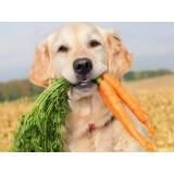 day care para cachorros Higienópolis