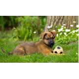 day care para cães Higienópolis