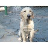 detetives de cachorro com cão farejador Aldeia da serra -