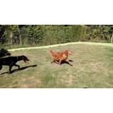 empresa de aluguel de cães de segurança Morumbi