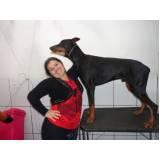 empresa de cães de segurança Butantã