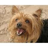 empresa para encontrar cachorro perdido com cão farejador Aldeia da serra -