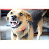 hospedagem para cão bravo em sp Rio Pequeno