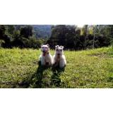hotéis para cachorros preço Granja Viana