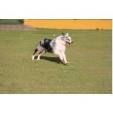 hotelzinho de cachorro com atividades físicas em sp Bom Retiro