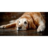 hotelzinho para cachorro idoso em sp Raposo Tavares
