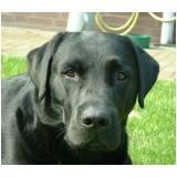 onde encontrar adestramento de cães policiais Higienópolis