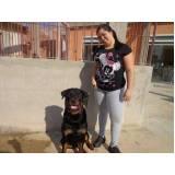 onde encontrar aluguel de cães de guarda em SP Aldeia da serra -