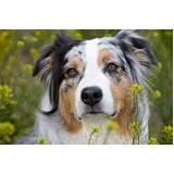 onde encontrar locação de cachorro segurança Carapicuíba