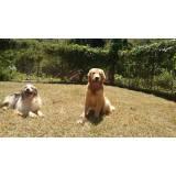 orçamento de adestrador de cães golden retriever Alphaville