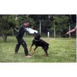 quanto custa adestramento para cão de guarda Granja Viana