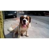 quanto custa cão de segurança para locação Jaguaré