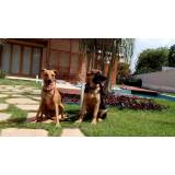 segurança com cães alugados Vila Olímpia