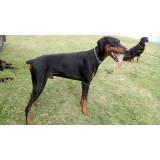 segurança com cão alugado Rio Pequeno