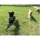 serviços de treinamento para cachorros