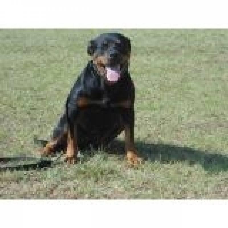 Cão Farejador