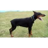 Seguranças com Cachorros