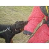 Treinamentos para Cães