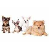 spa para cães em SP Alto da Lapa