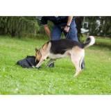 treinador de cães farejadores Bom Retiro