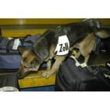 treinador de cão farejadores valores Cotia