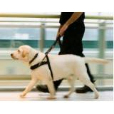 treinamento de cachorros farejador Lapa